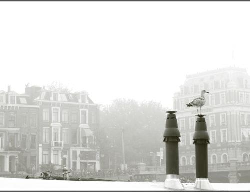 Amsterdam v hmle